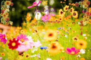 ambientalis-imagen-blog-flores